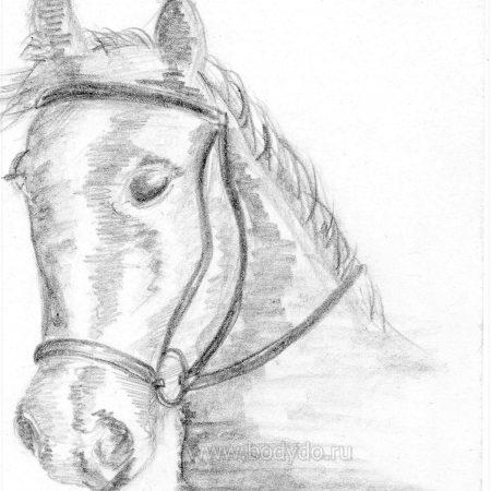 Рисунок Задумчивая лошадка